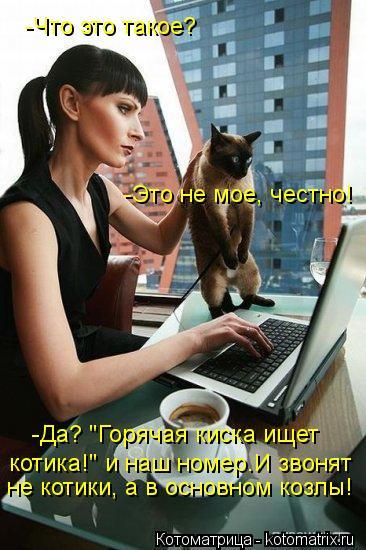 """Котоматрица: -Да? """"Горячая киска ищет не котики, а в основном козлы! -Что это такое? -Это не мое, честно! котика!"""" и наш номер.И звонят"""