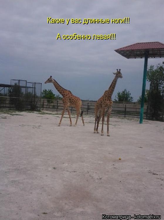 Котоматрица: Какие у вас длинные ноги!!! А особенно левая!!!