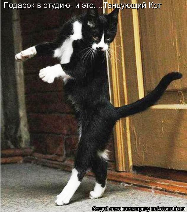Котоматрица: Подарок в студию- и это....Танцующий Кот