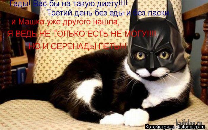 Котоматрица: Гады! Вас бы на такую диету!!!!  Третий день без еды и без ласки,  и Машка уже другого нашла,  Я ВЕДЬ НЕ ТОЛЬКО ЕСТЬ НЕ МОГУ!!!! НО И СЕРЕНАДЫ ПЕТЬ!!!