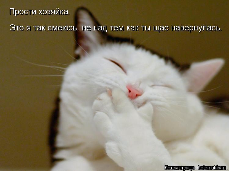 Котоматрица: Прости хозяйка. Это я так смеюсь. не над тем как ты щас навернулась.