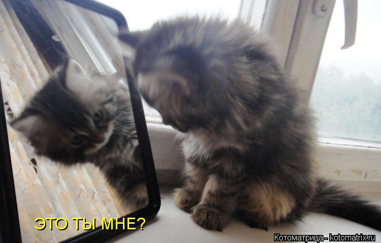 Котоматрица: ЭТО ТЫ МНЕ?