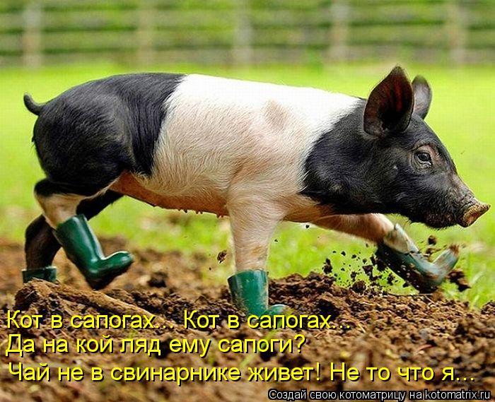 Котоматрица: Кот в сапогах... Кот в сапогах... Да на кой ляд ему сапоги? Чай не в свинарнике живет! Не то что я...