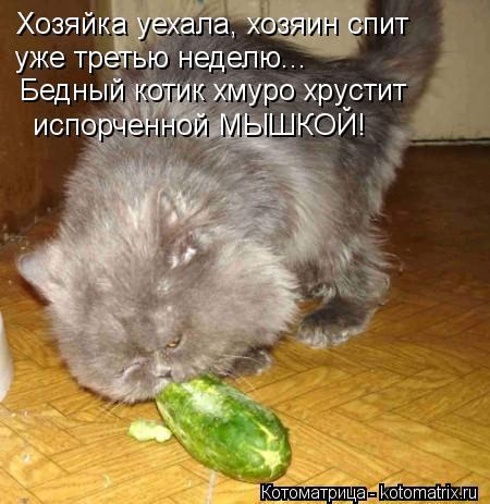 Котоматрица: Хозяйка уехала, хозяин спит уже третью неделю... Бедный котик хмуро хрустит испорченной МЫШКОЙ!