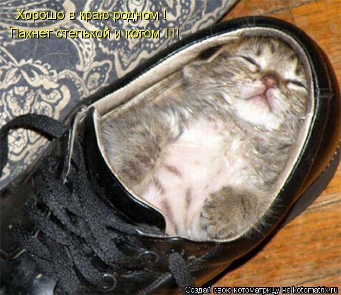 Котоматрица: Хорошо в краю родном ! Пахнет стелькой и котом !!!!