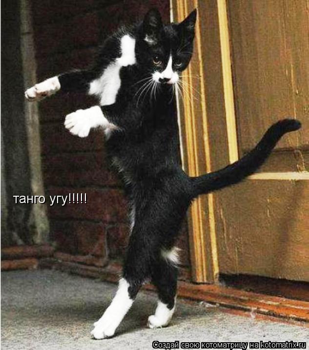 Котоматрица: танго угу!!!!!