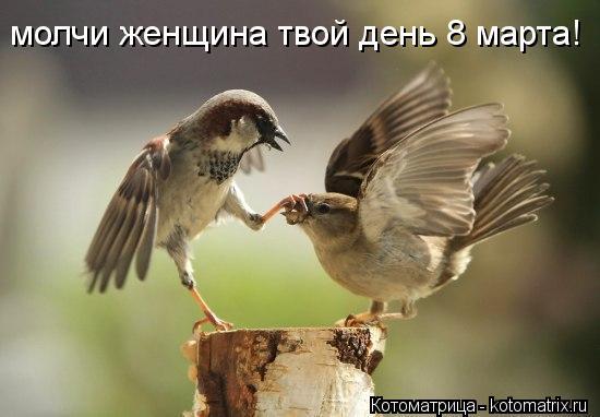 Котоматрица: молчи женщина твой день 8 марта!