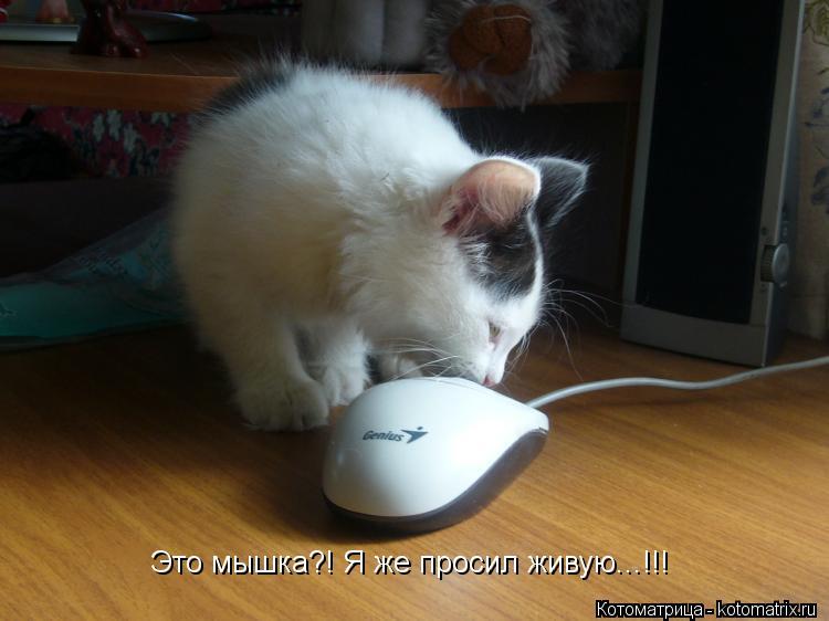 Котоматрица: Это мышка?! Я же просил живую...!!!