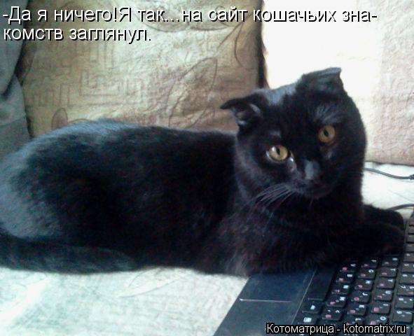 Котоматрица: -Да я ничего!Я так...на сайт кошачьих зна- комств заглянул.