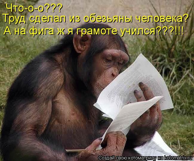 Котоматрица: Что-о-о??? Труд сделал из обезьяны человека? А на фига ж я грамоте учился???!!!