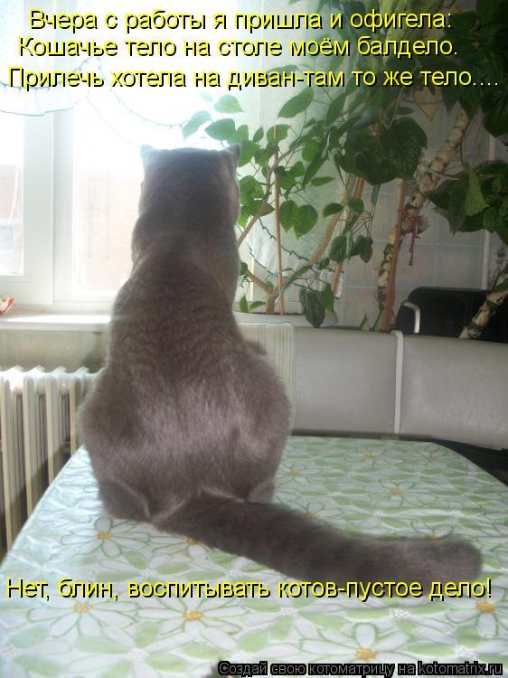 Котоматрица: Вчера с работы я пришла и офигела: Кошачье тело на столе моём балдело. Прилечь хотела на диван-там то же тело.... Нет, блин, воспитывать котов-п
