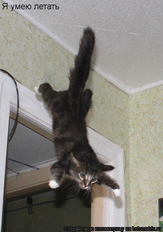 Котоматрица: Я умею летать