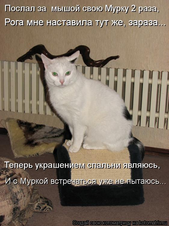 Котоматрица: Рога мне наставила тут же, зараза... Теперь украшением спальни являюсь, И с Муркой встречаться уже не пытаюсь... Послал за  мышой свою Мурку 2 р