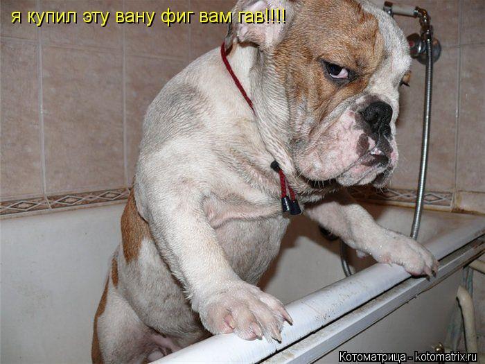 Котоматрица: я купил эту вану фиг вам гав!!!!