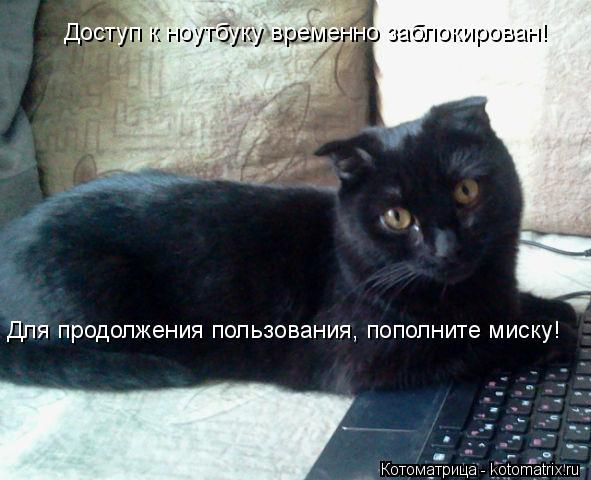 Котоматрица: Для продолжения пользования, пополните миску! Доступ к ноутбуку временно заблокирован!