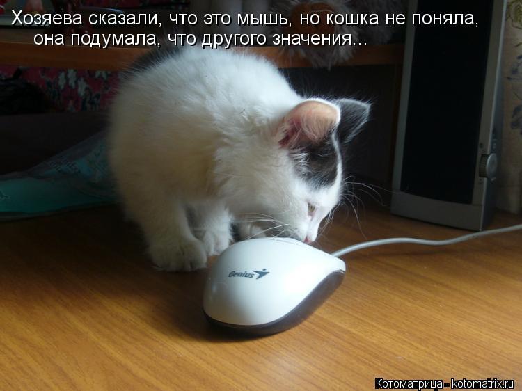 Котоматрица: Хозяева сказали, что это мышь, но кошка не поняла, она подумала, что другого значения...