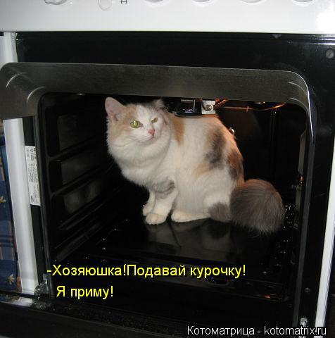 Котоматрица: -Хозяюшка!Подавай курочку! Я приму!