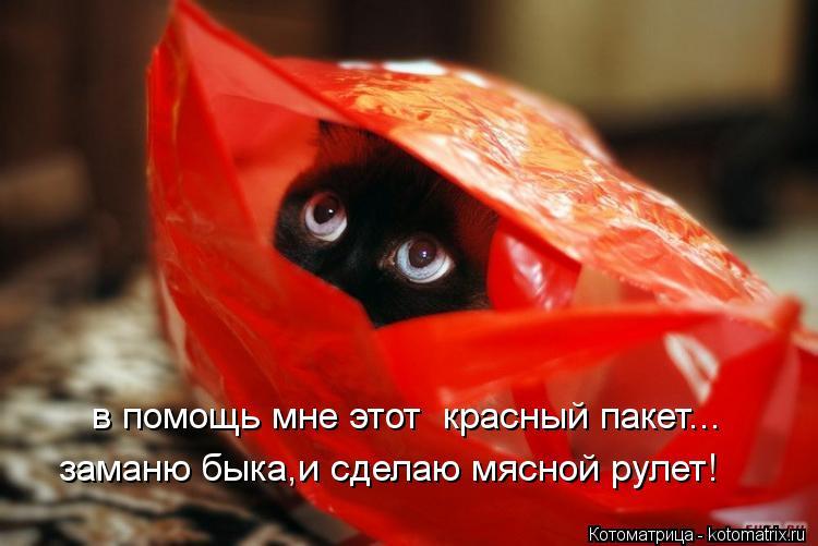 Котоматрица: заманю быка,и сделаю мясной рулет! в помощь мне этот  красный пакет...