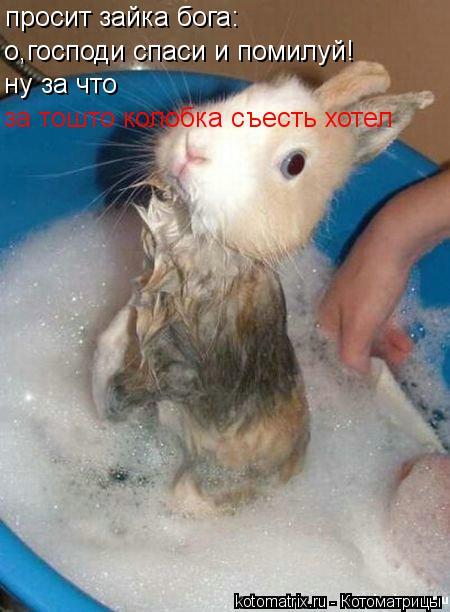Котоматрица: просит зайка бога: о,господи спаси и помилуй! ну за что  за тошто колобка съесть хотел
