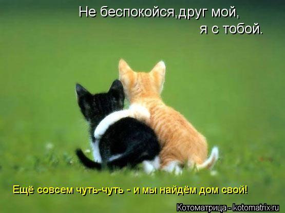 Котоматрица: Не беспокойся,друг мой, я с тобой. Ещё совсем чуть-чуть - и мы найдём дом свой!