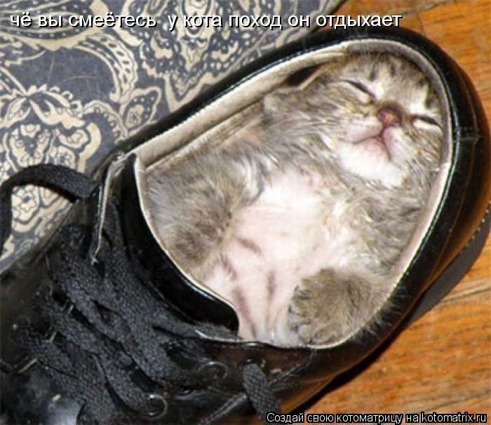 Котоматрица: чё вы смеётесь  у кота поход он отдыхает
