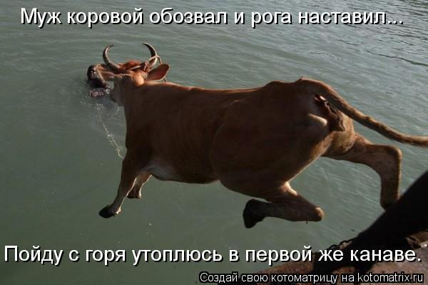 Котоматрица: Муж коровой обозвал и рога наставил... Пойду с горя утоплюсь в первой же канаве.