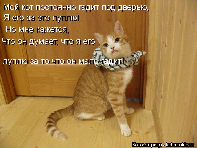 Котоматрица: Мой кот постоянно гадит под дверью, Я его за это луплю! Но мне кажется, Что он думает, что я его луплю за то что он мало гадит!