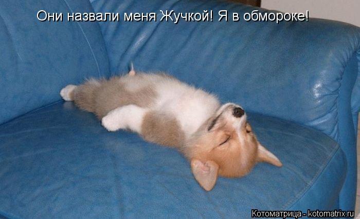 Котоматрица: Они назвали меня Жучкой! Я в обмороке!