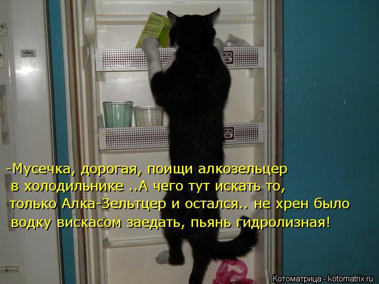 Котоматрица: -Мусечка, дорогая, поищи алкозельцер в холодильнике ..А чего тут искать то, только Алка-Зельтцер и остался.. не хрен было водку вискасом заеда