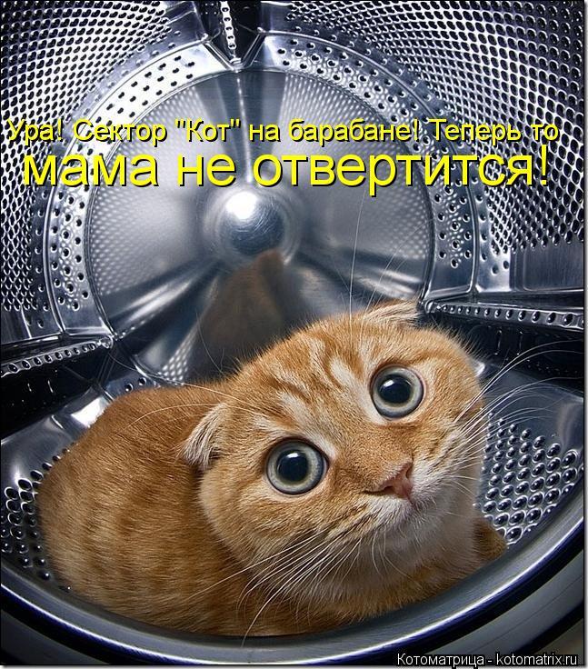 """Котоматрица: мама не отвертится! Ура! Сектор """"Кот"""" на барабане! Теперь то"""