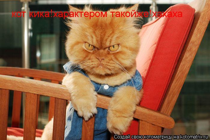 Котоматрица: кот кика!характером такойже!хахаха