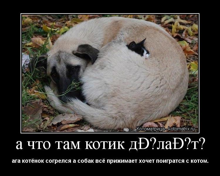 Котоматрица: а что там котик делает? ага котёнок согрелся а собак всё прижимает хочет поигратся с котом.