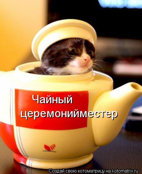 Котоматрица: Чайный церемонийместер