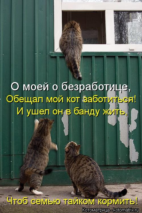 Котоматрица: О моей о безработице, Обещал мой кот заботиться! И ушел он в банду жить, Чтоб семью тайком кормить!