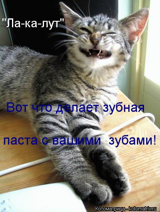 """Котоматрица: """"Ла-ка-лут"""" Вот что делает зубная  паста с вашими  зубами!"""