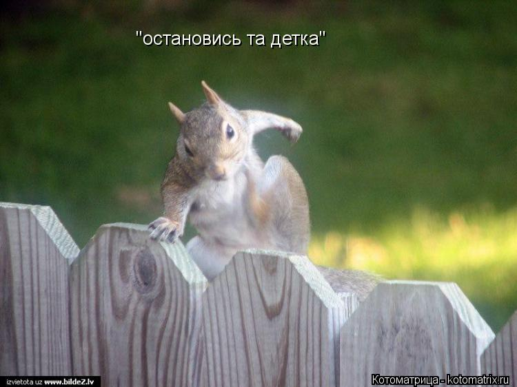 "Котоматрица: ""остановись та детка"""
