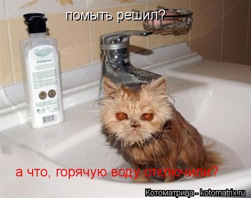 Котоматрица: помыть решил? а что, горячую воду отключили?