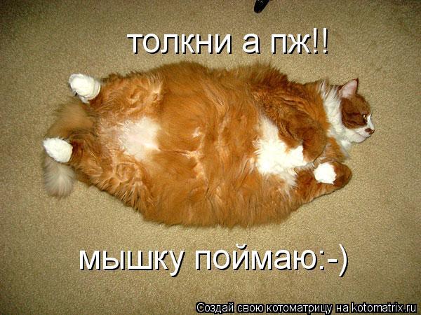 Котоматрица: толкни а пж!! мышку поймаю:-)