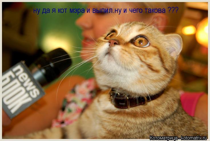 Котоматрица: ну да я кот мэра и выпил.ну и чего такова ???