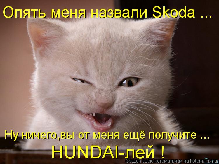 Котоматрица: Опять меня назвали Skoda ... Ну ничего,вы от меня ещё получите ... HUNDAI-лей !