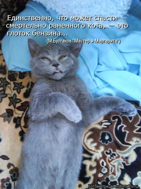"""Котоматрица: Единственно, что может спасти  смертельно раненного кота, — это  глоток бензина... (М.Булгаков """"Мастер и Маргарита"""")"""