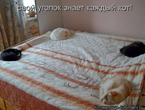 Котоматрица: свой уголок знает каждый кот!