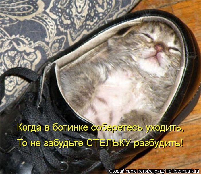 Котоматрица: Когда в ботинке соберетесь уходить, То не забудьте СТЕЛЬКУ разбудить!