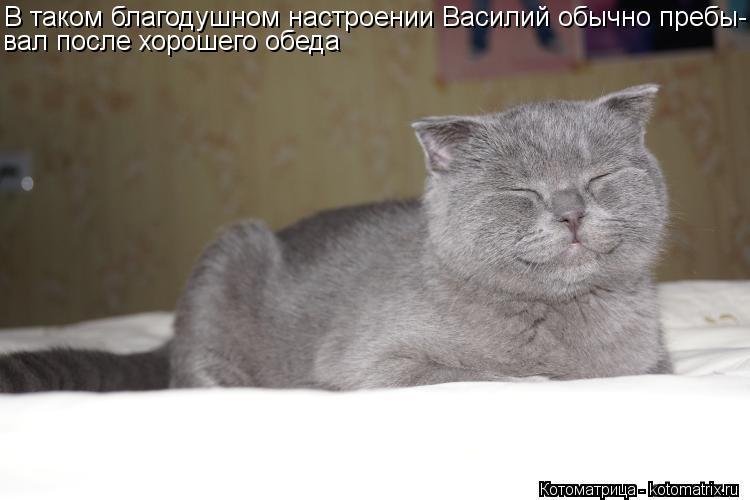 Котоматрица: В таком благодушном настроении Василий обычно пребы- вал после хорошего обеда