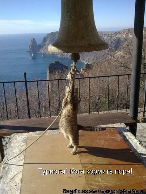 Котоматрица: Туристы! Кота кормить пора!