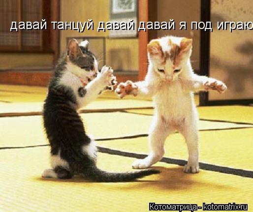 Котоматрица: давай танцуй давай давай я под играю