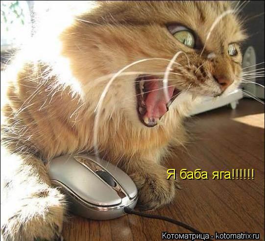 Котоматрица: Я баба яга!!!!!!