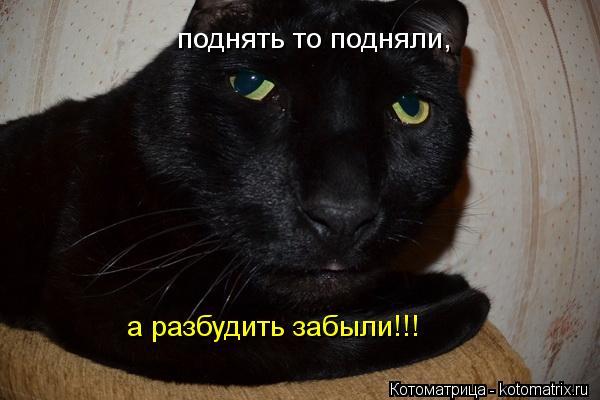 Котоматрица: поднять то подняли, а разбудить забыли!!!