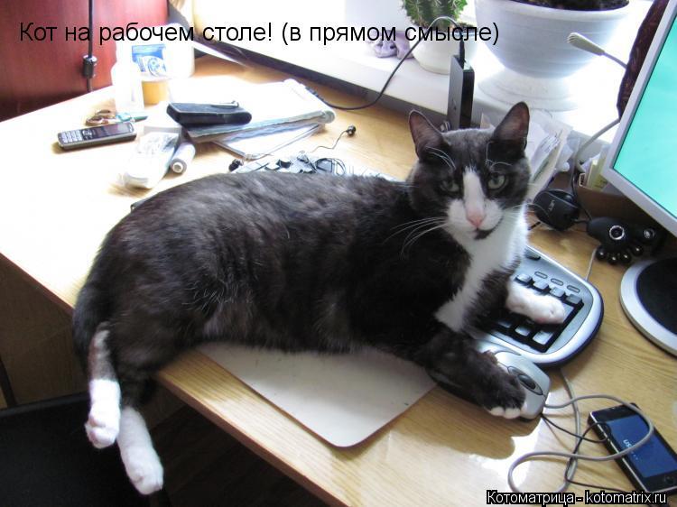 Котоматрица: Кот на рабочем столе! (в прямом смысле)