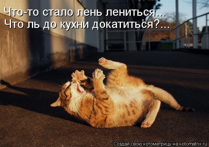Котоматрица: Что-то стало лень лениться... Что ль до кухни докатиться?...